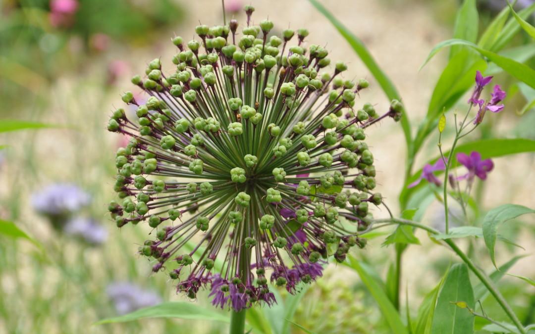 A Delicate Balance: seeds of wisdom